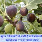 अंजीर के फायदे, नुकसान एवं औषधीय गुण Anjeer Benefits Side Effects in Hindi.